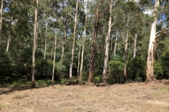 land-clearing-yarra-valley-1
