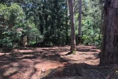 forestry-mulching-emerald