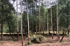 forestry-mulching-monbulk-1
