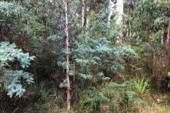 forestry-mulching-monbulk