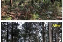 forestry-mulching-yarra-valley