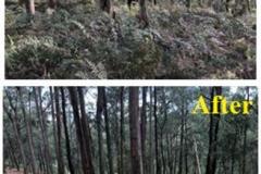forestry-mulching