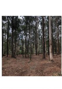 forestry mulching coyarra valleyckatoo