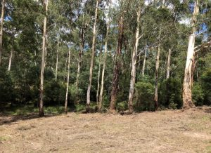land clearing yarra valley