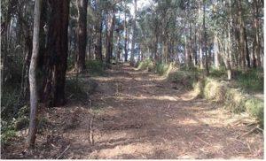 tracks fire breaks yarra valley