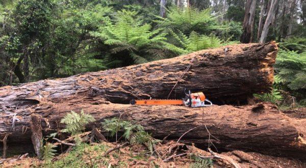 chainsaw works yarra valley