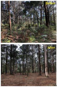 forestry mulching yarra valley