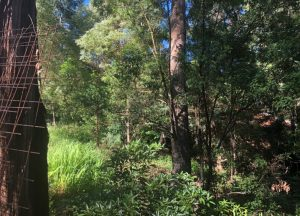 forest clearing yarra valley